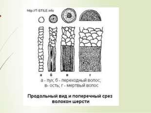 Свойства волокон шерсти. Длина волокон шерсти: от 20 до 450мм, различают: —к