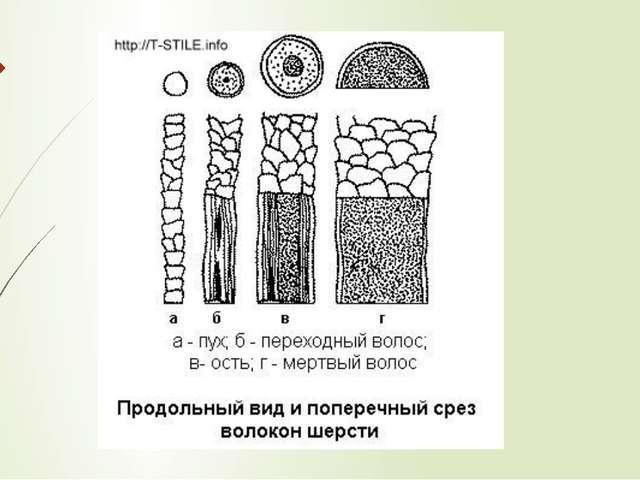 Свойства волокон шерсти. Длина волокон шерсти: от 20 до 450мм, различают: —к...