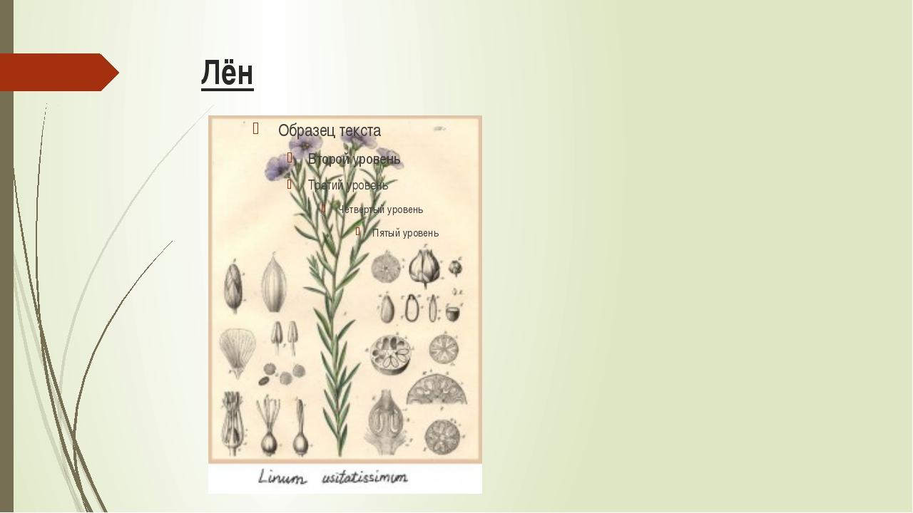 Выращивание Культивационный цикл льна –100 дней. Лён, в отличие от хлопка, н...