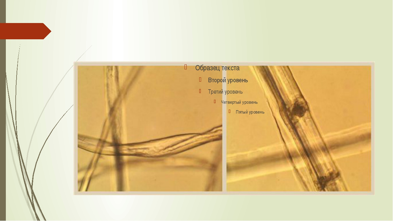 Волокно льна имеет уникальные потребительские свойства: лен высоко гигроскопи...