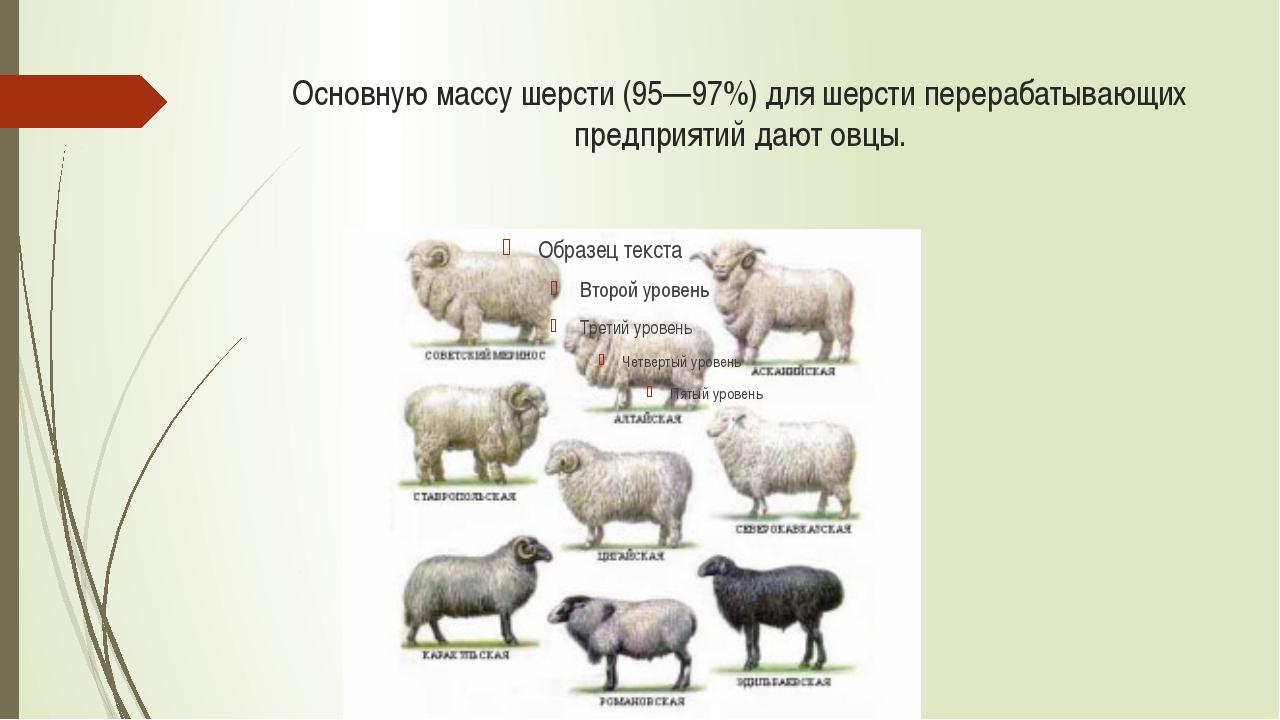Виды волокон шерсти По составу волокон различают шерсть однородную (тонкую, п...