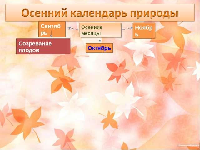 Осенние месяцы Сентябрь Октябрь Ноябрь Созревание плодов