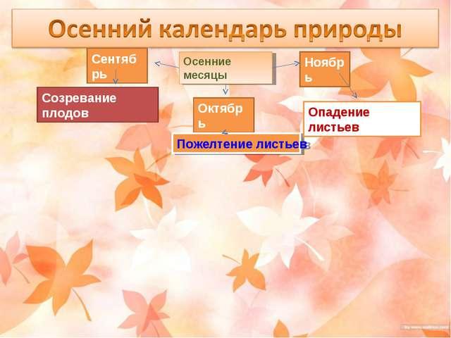 Осенние месяцы Сентябрь Октябрь Ноябрь Созревание плодов Пожелтение листьев О...