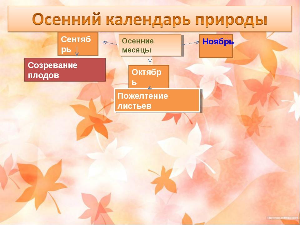 Осенние месяцы Сентябрь Октябрь Ноябрь Созревание плодов Пожелтение листьев