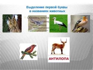 Выделение первой буквы в названиях животных
