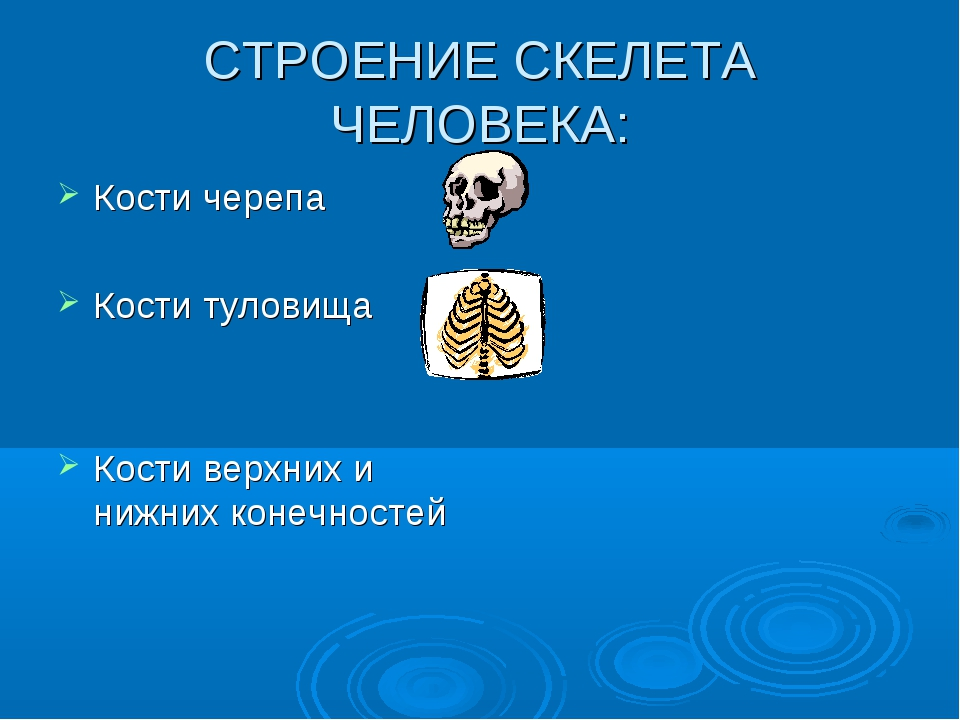 СТРОЕНИЕ СКЕЛЕТА ЧЕЛОВЕКА: Кости черепа Кости туловища Кости верхних и нижних...