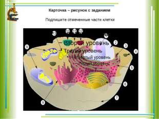 Карточка – рисунок с заданием Подпишите отмеченные части клетки