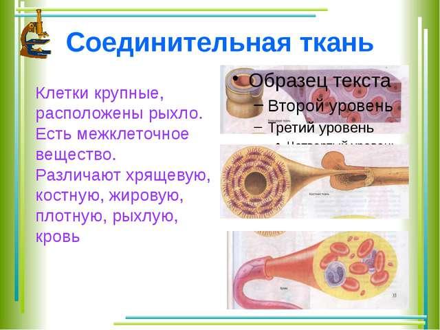 Функции Эпителиальной ткани: покровная (пограничная, защитная) и секреторная....