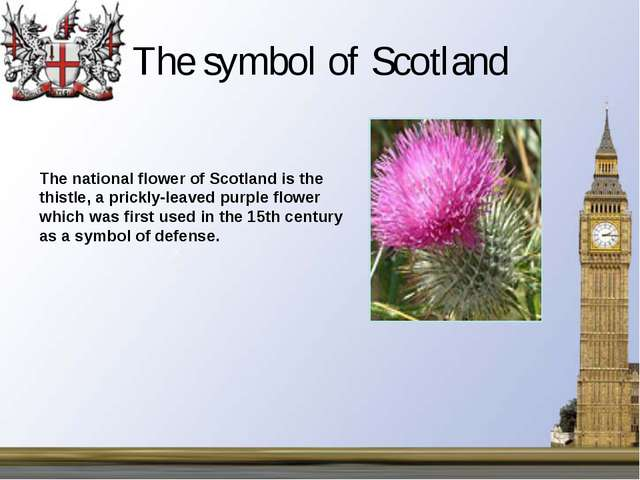 The symbol of Scotland The national flower of Scotland is the thistle, a pric...