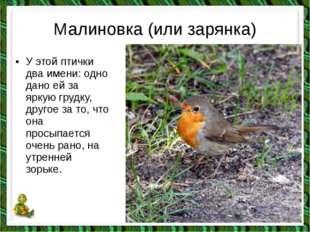 Малиновка (или зарянка) •У этой птички два имени: одно дано ей за яркую груд