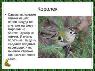 Королёк •Самые маленькие птички наших лесов никуда не улетают на зиму – моро