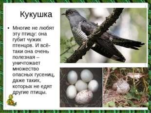 Кукушка •Многие не любят эту птицу: она губит чужих птенцов. И всё-таки она