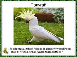 Попугай Какая птица имеет ложкообразное углубление на языке, чтобы лучше удер