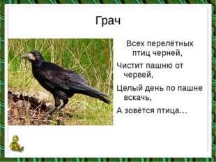 Грач Всех перелётных птиц черней, Чистит пашню от червей, Целый день по пашне