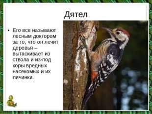 Дятел •Его все называют лесным доктором за то, что он лечит деревья – вытаск
