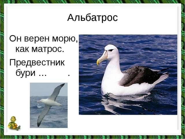 Альбатрос Он верен морю, как матрос. Предвестник бури … .