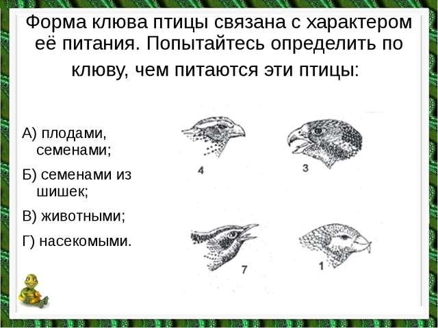 Форма клюва птицы связана с характером её питания. Попытайтесь определить по...