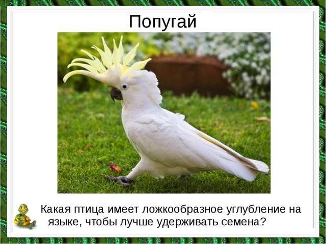 Попугай Какая птица имеет ложкообразное углубление на языке, чтобы лучше удер...