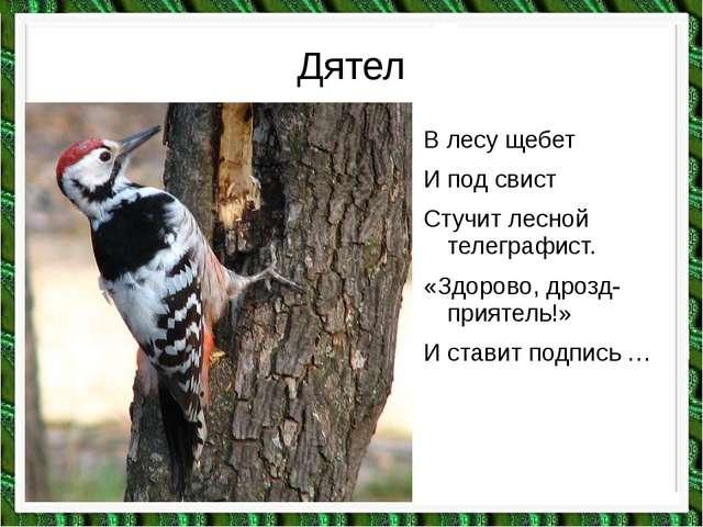 Дятел В лесу щебет И под свист Стучит лесной телеграфист. «Здорово, дрозд-при...