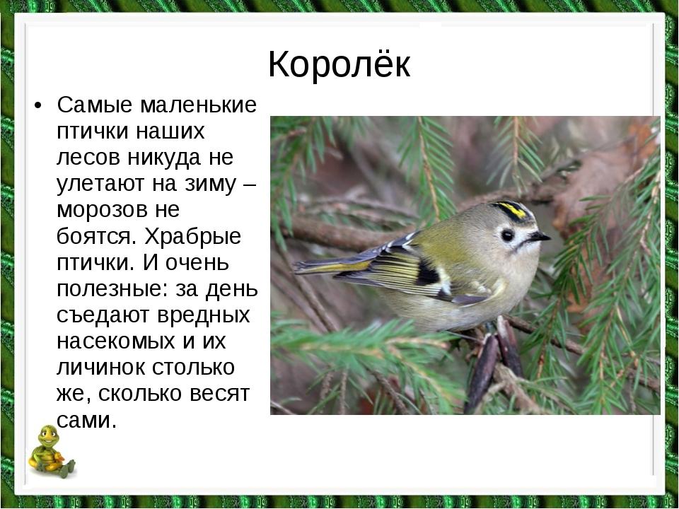 Королёк •Самые маленькие птички наших лесов никуда не улетают на зиму – моро...