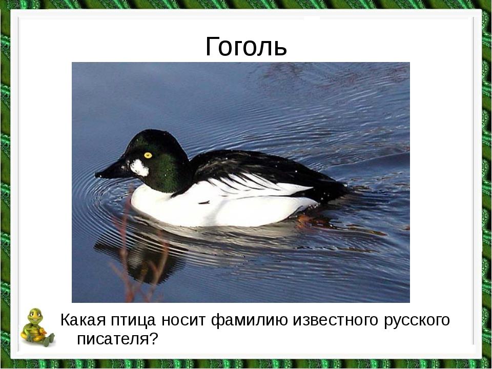 Гоголь Какая птица носит фамилию известного русского писателя?