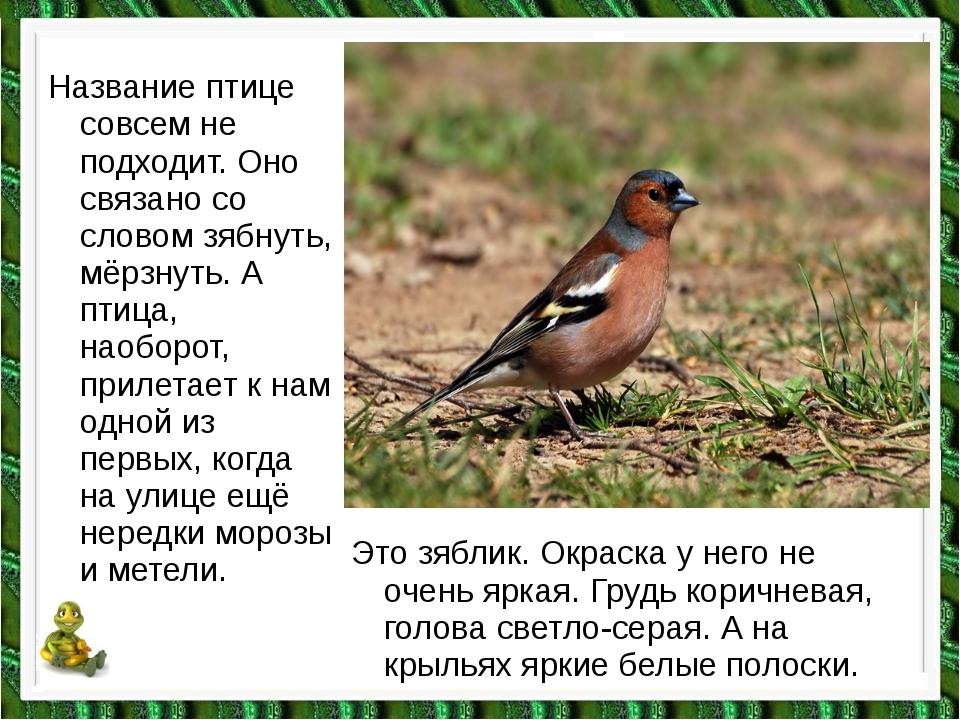 Название птице совсем не подходит. Оно связано со словом зябнуть, мёрзнуть. А...