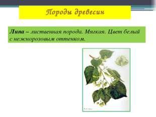 Породы древесин Липа – лиственная порода. Мягкая. Цвет белый с нежнорозовым о