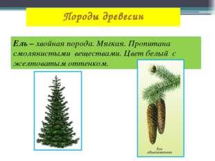 Породы древесин Ель – хвойная порода. Мягкая. Пропитана смолянистыми вещества