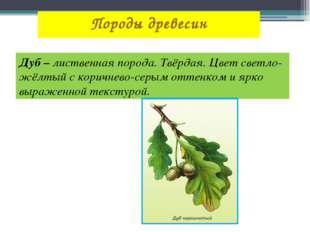 Породы древесин Дуб – лиственная порода. Твёрдая. Цвет светло-жёлтый с коричн