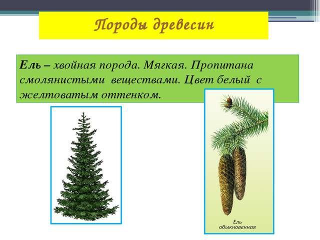 Породы древесин Ель – хвойная порода. Мягкая. Пропитана смолянистыми вещества...