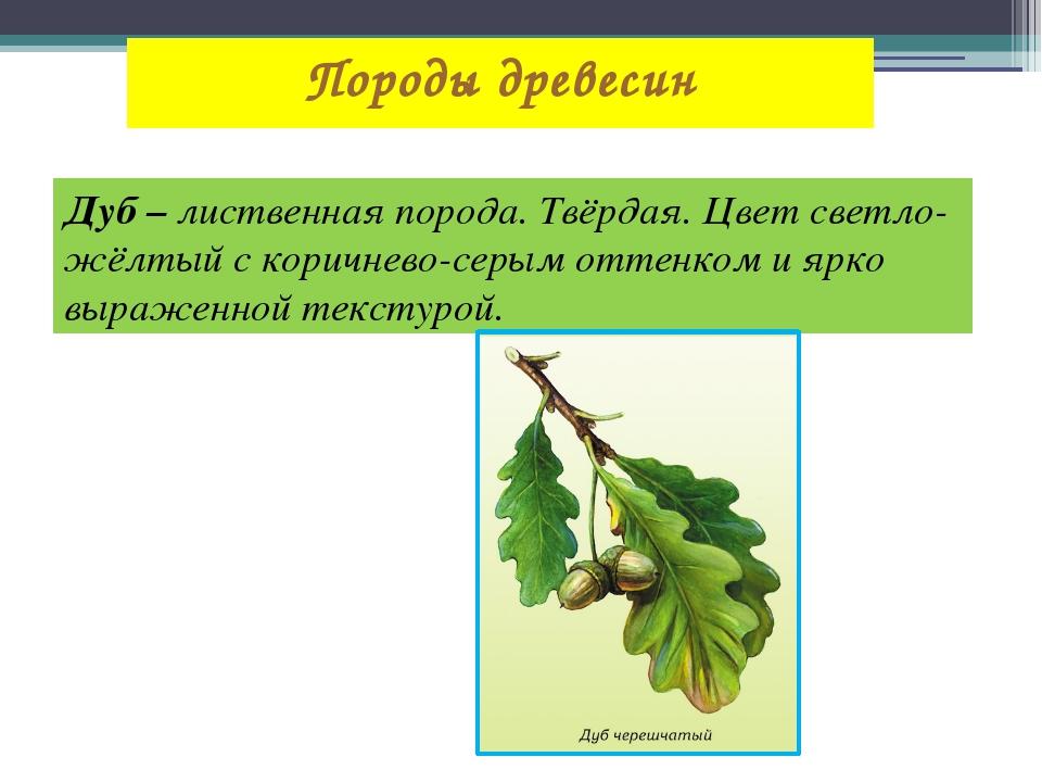 Породы древесин Дуб – лиственная порода. Твёрдая. Цвет светло-жёлтый с коричн...