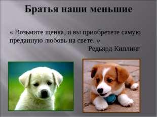 « Возьмите щенка, и вы приобретете самую преданную любовь на свете. » Ре