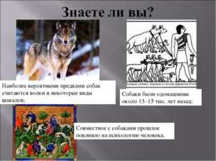 Собаки были одомашнены около 13–15 тыс. лет назад; Совместное с собаками прош