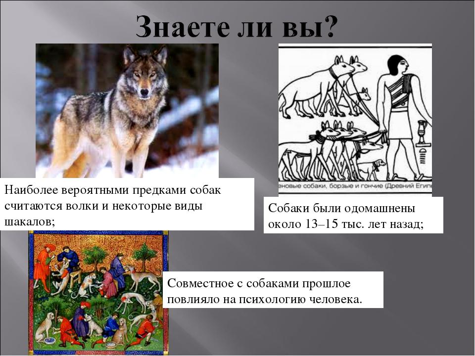 Собаки были одомашнены около 13–15 тыс. лет назад; Совместное с собаками прош...