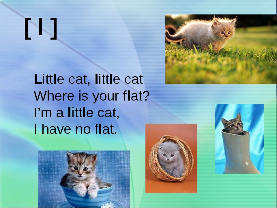 Little cat, little cat Where is your flat? I'm a little cat, I have no flat....