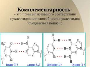 Комплементарность- - это принцип взаимного соответствия нуклеотидов или спос