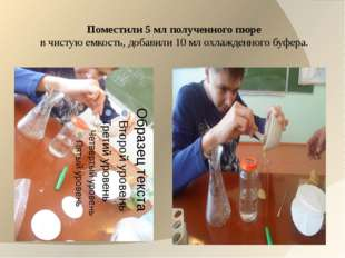 Поместили 5 мл полученного пюре в чистую емкость, добавили 10 мл охлажденного