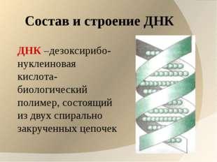 Состав и строение ДНК ДНК –дезоксирибо- нуклеиновая кислота- биологический по
