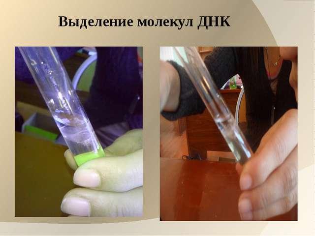 Выделение молекул ДНК
