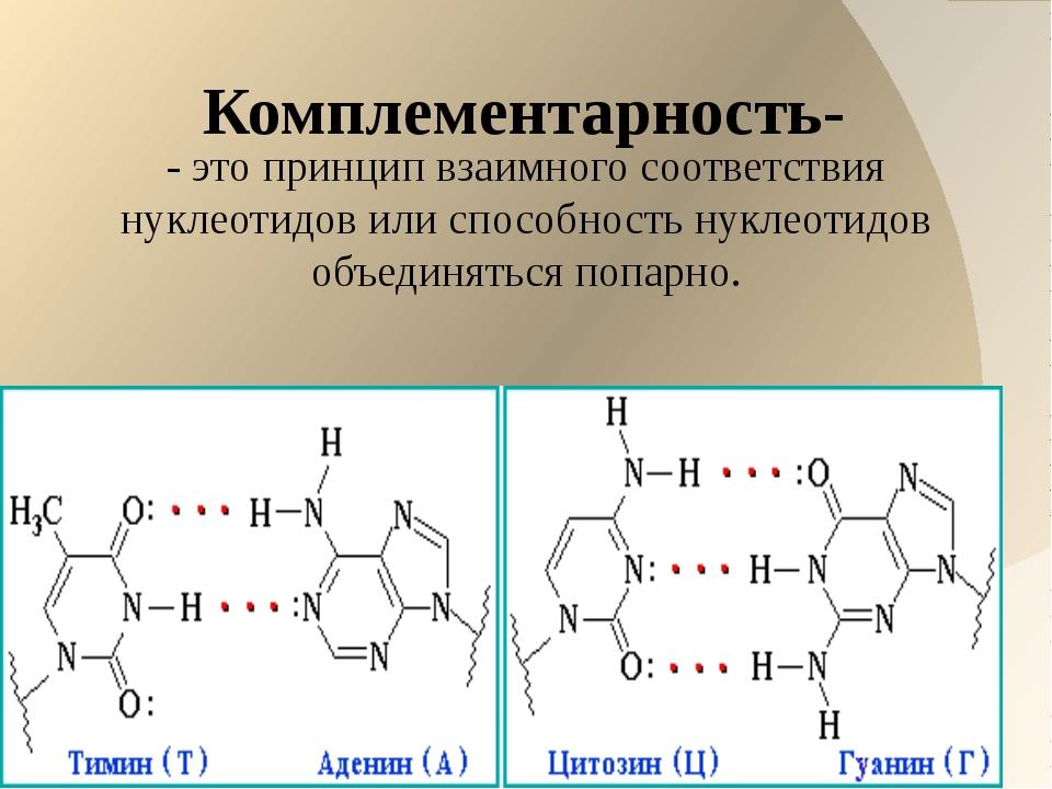 Комплементарность- - это принцип взаимного соответствия нуклеотидов или спос...