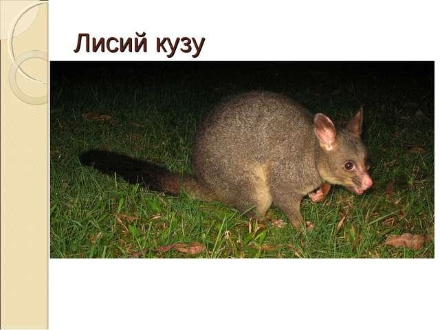 Лисий кузу