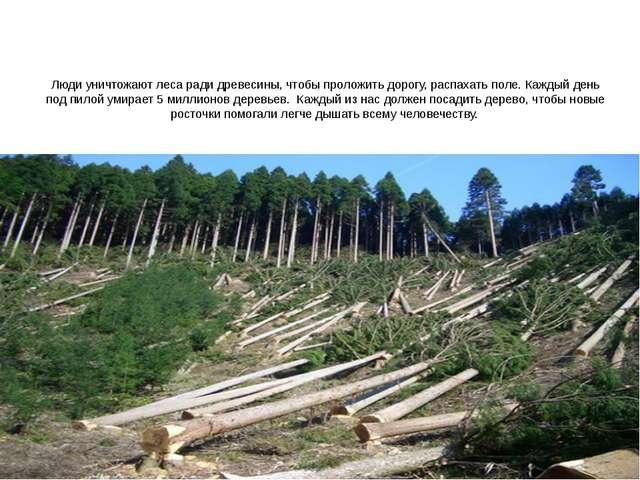 Люди уничтожают леса ради древесины, чтобы проложить дорогу, распахать поле....
