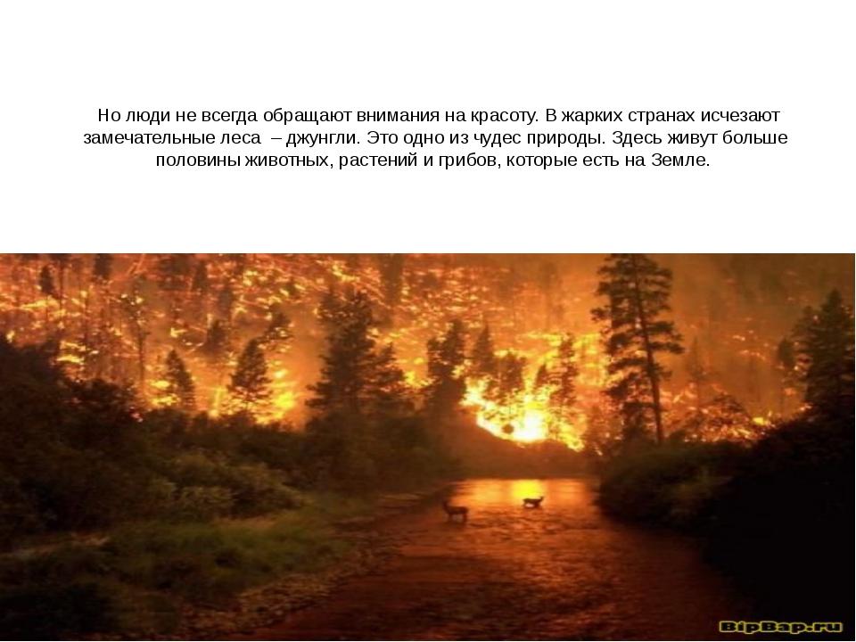 Но люди не всегда обращают внимания на красоту. В жарких странах исчезают за...
