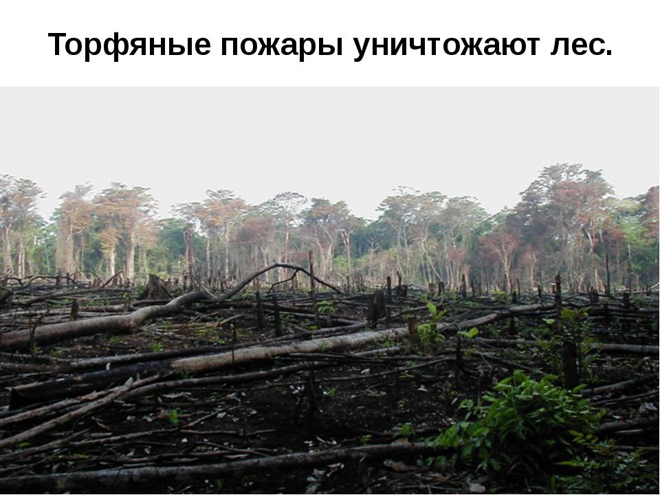 Торфяные пожары уничтожают лес.