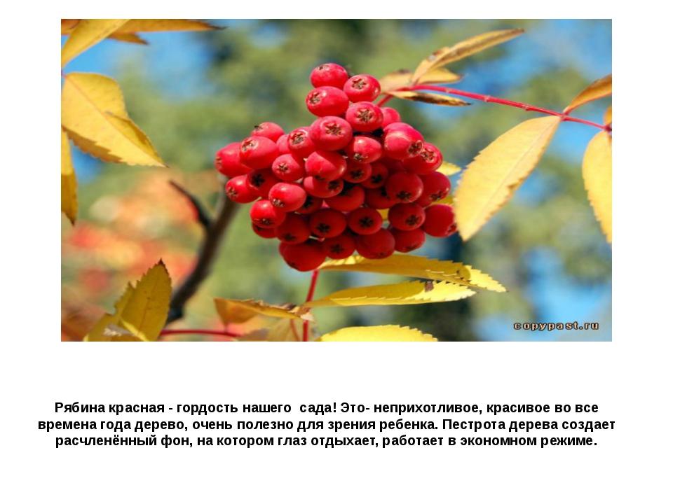 Рябина красная - гордость нашего сада! Это- неприхотливое, красивое во все вр...