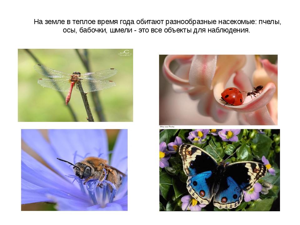 На земле в теплое время года обитают разнообразные насекомые: пчелы, осы, баб...