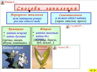 Запліднення у квіткових рослин Для того, щоб зав'язався плід і розвивалася на