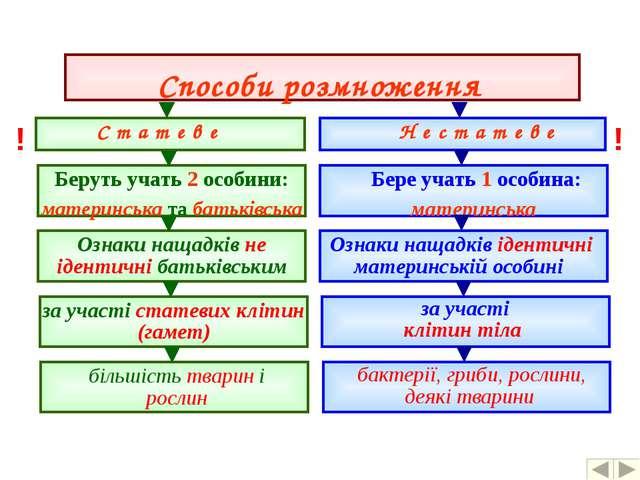 Способи розмноження С т а т е в е Н е с т а т е в е Беруть учать 2 особини:...