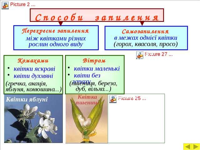 Запліднення у квіткових рослин Для того, щоб зав'язався плід і розвивалася на...