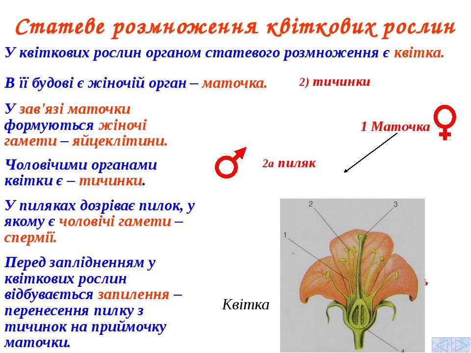 Статеве розмноження квіткових рослин Квітка 2) тичинки 1 Маточка 1а зав'язь 2...